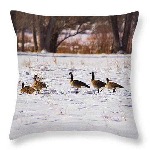 Canadian Geese At Sunrise II