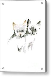 Cat Cats Photo Picture Brown Gray Little Funny Twins Pic Meow Watercolor Painting Acrylic Print by Johana Szmerdt