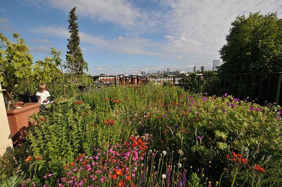 Rooftop Oasis Perennial Jungle Rotterdam Netherlands Landscape Landscape Design