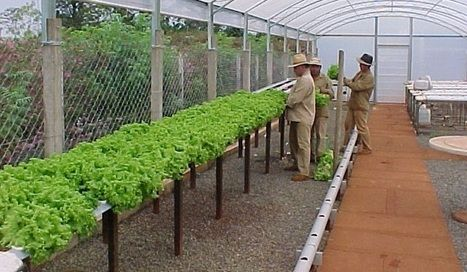 Ventajas De La Hidroponia O Cultivo Hidroponico Cultivos - Cultivo-hidroponicos