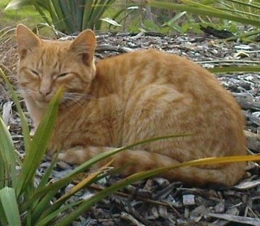 We are a small group of volunteers who feed a little colony of cats that live on Cavendish Drive in Manakau and we are desperate for more volunteers.  If you think you'd be able to spare some time once a week to feed these little guys, then please call Monique on 8495877, txt 027 513 4988 or email me at moniquevanderheijden79@gmail.com.  Thanks :-) 0.00