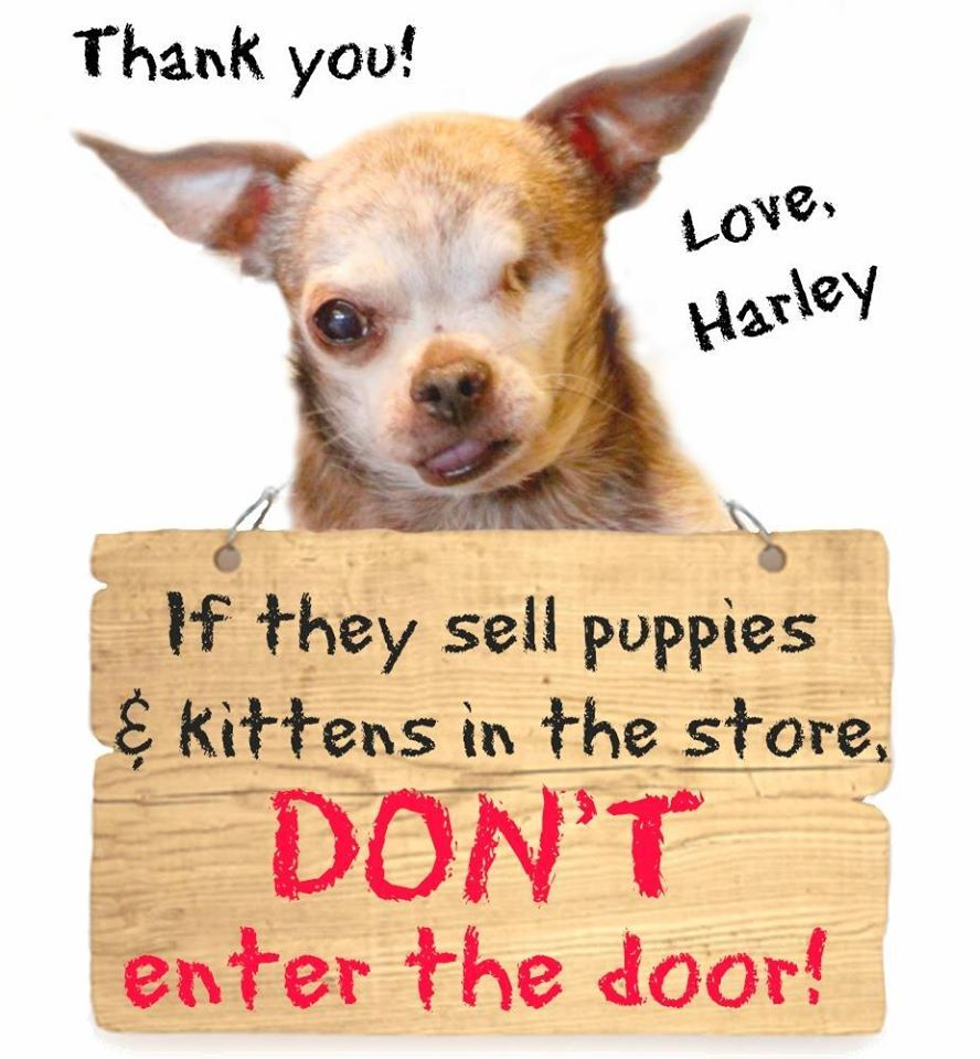 Boycott Pet Stores That Sell Kittens And Puppies Kittens And Puppies Buy Puppies Puppies
