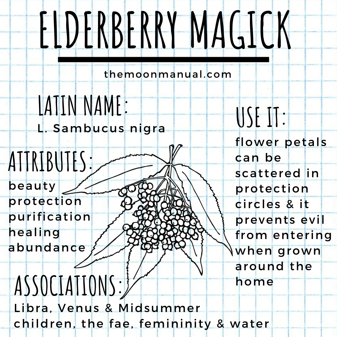 The Green Witch Diaries - Elderberry