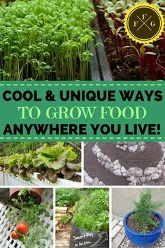 81733cc69f9c39ddf61808f3e85b81e6 - Grow Food Anywhere The New Guide To Small Space Gardening