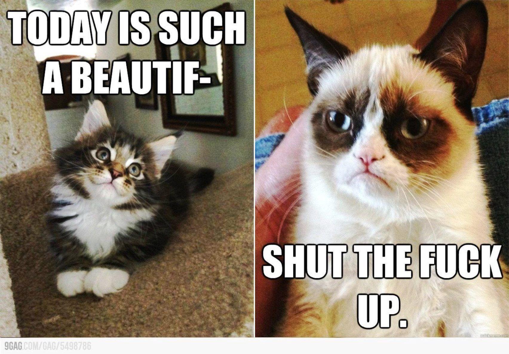 Funny Memes Quotes Tumblr : Unique funny happy birthday wishes tumblr