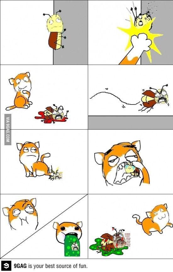 My Cat S Favorite Hobby Favorite Hobby Cats Cat S