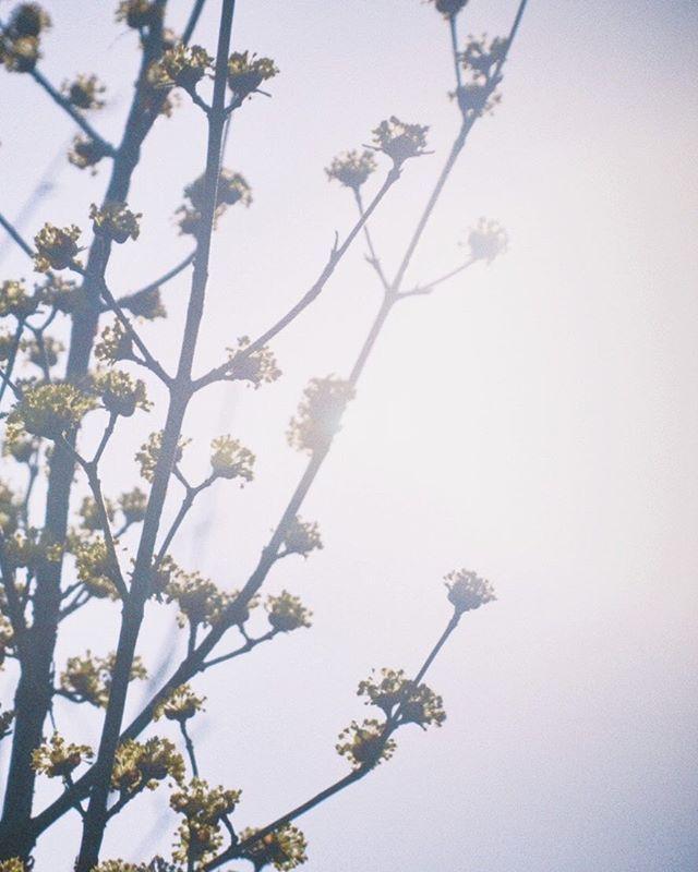 #オールドレンズ #oldlens #オールドレンズに恋をした #オールドレンズ部 #恋するオールドレンズ部 #オールドレンズの世界 #oldlens_japan #oldlens_tokyo #nikon #instaflower #ファインダー越しの私の世界 #デジタルでフィルムを再現したい #oldnikkor #花のある暮らし #flowerlovers #nikkor #flowerstagram #nikonphotography #vague_memories #loveoldlensclub #オールドレンズで繋がりたい #オールドレンズに恋してる #vintagelens #photovogue #indies_gram #team_jp_flower #indy_photolife #pics_jp #reco_ig #phos_japan