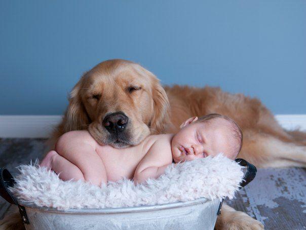 Dog And Newborn Cuddling 604x454 Jpg 604 454 Dogs And Kids