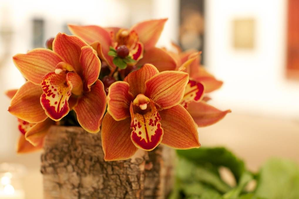 Cymbidium Orchid Cymbidium Orchids Flowers Orchids