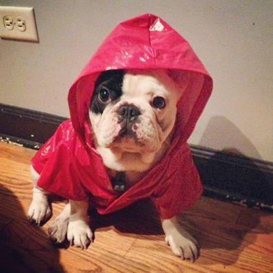 Hey daddy, I'm ready for my walk in the rain.
