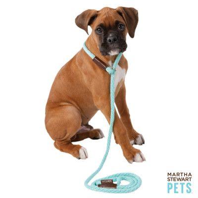 I Want A Boxer Miniature Australian Shepherd Puppies Puppy Leash Puppy Collars