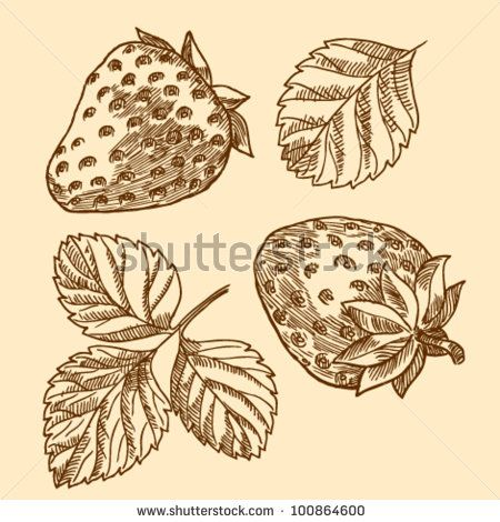 Engraving with image of strawberry. Vector illustration. Vintage collection by Bariskina, via ShutterStock