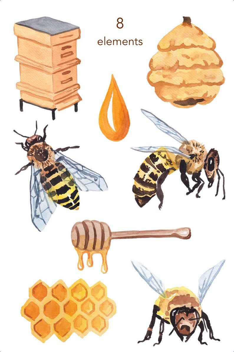 Watercolor Clipart Bee Clipart Honey Nature Scrapbooking Etsy Bee Clipart Honey Art Watercolor Clipart