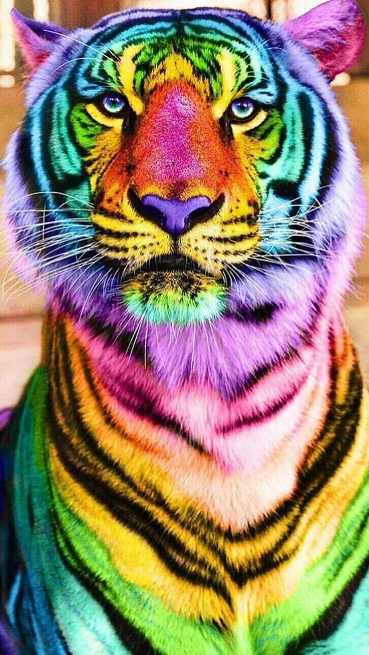 Colorful Tiger iPhone Wallpaper Cool wallpapers for