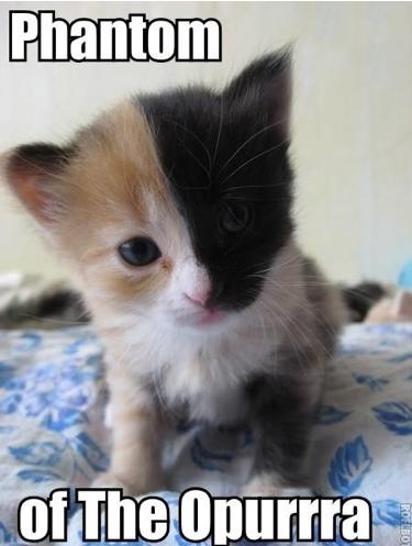 Phantom kitty