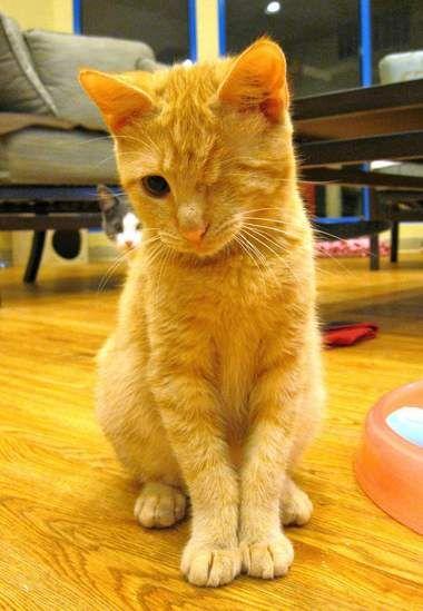 Pin On Kittens 2