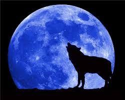 صور ذئاب Blue Moon Moon Pictures Wolf Moon