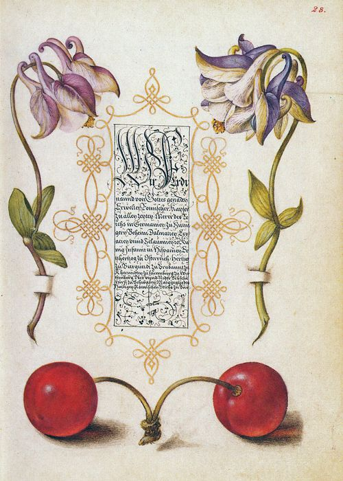 Columbine and Cherry in Model Book of Calligraphy, Joris Hoefnagel, illuminator; Georg Bocskay, scribe. Watercolors, gold and silver paint, and ink on parchment.