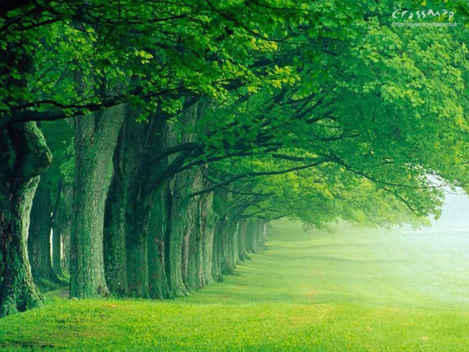 Powerpoint Background Forest Images Pictures