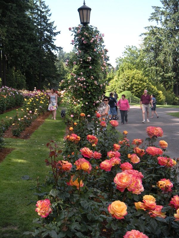 Roses In Garden: One The Most Beautiful Places To Visit In Late Spring Or