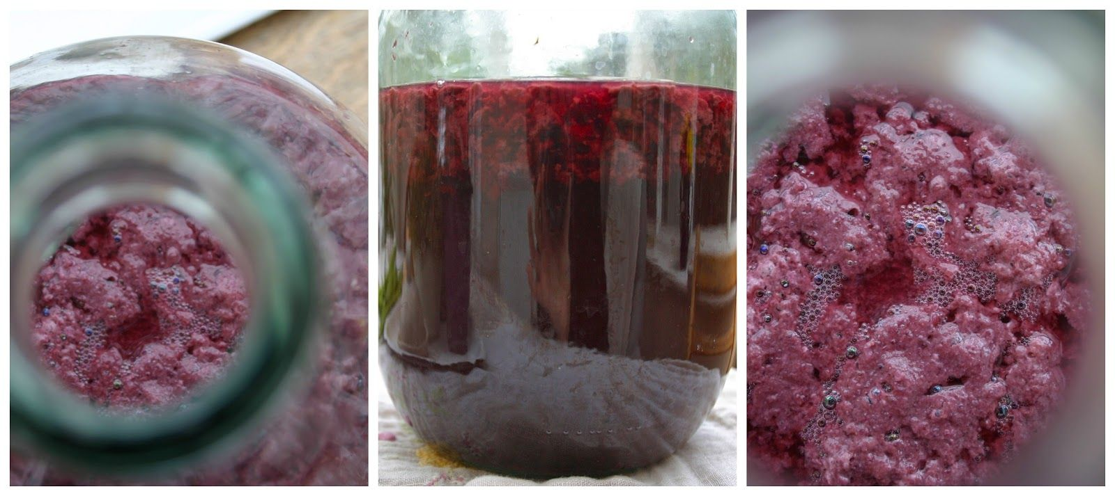And Here We Are... How I Made Wild Blackberry Cider