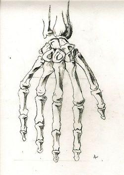 art skeleton supdrew anthonynarcotic