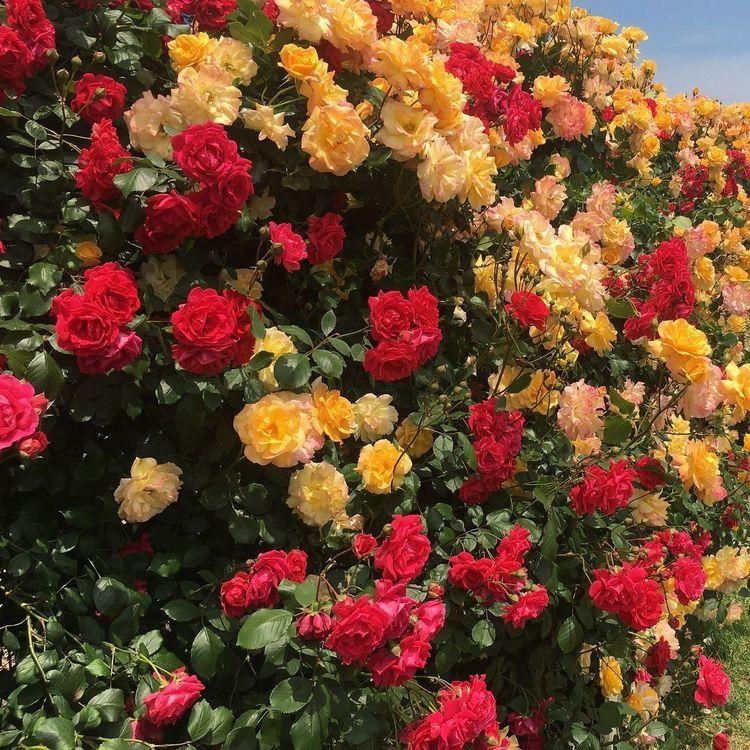 Pin by ミ 𝐛𝐫𝐢𝐚𝐧𝐧𝐚 𖧧 ࣪ on — flowers *・゚ (With images