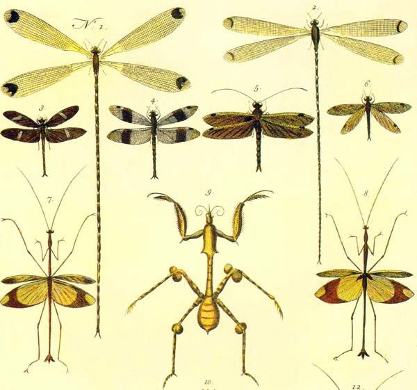 Vintage Dragonfly Diagram - Online Schematic Diagram •