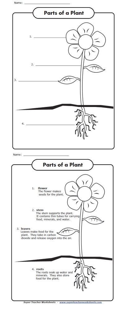Sassy image with regard to parts of a plant printable