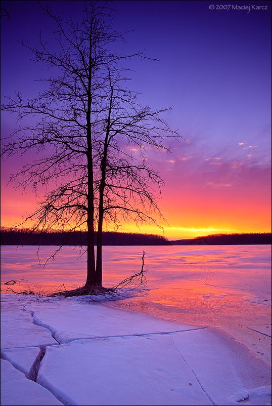 Lone Tree Guards A Purple-pink Sunset