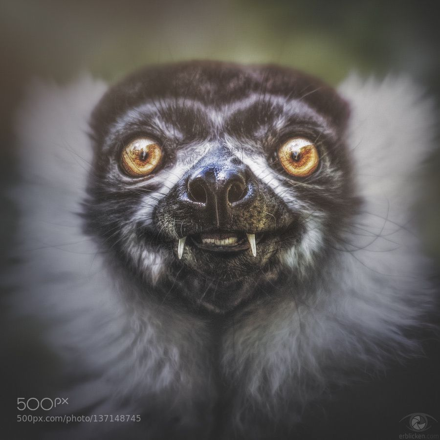 #animals Project Square: Apes XXII by erblicken http://ift.tt/1QjTIVz