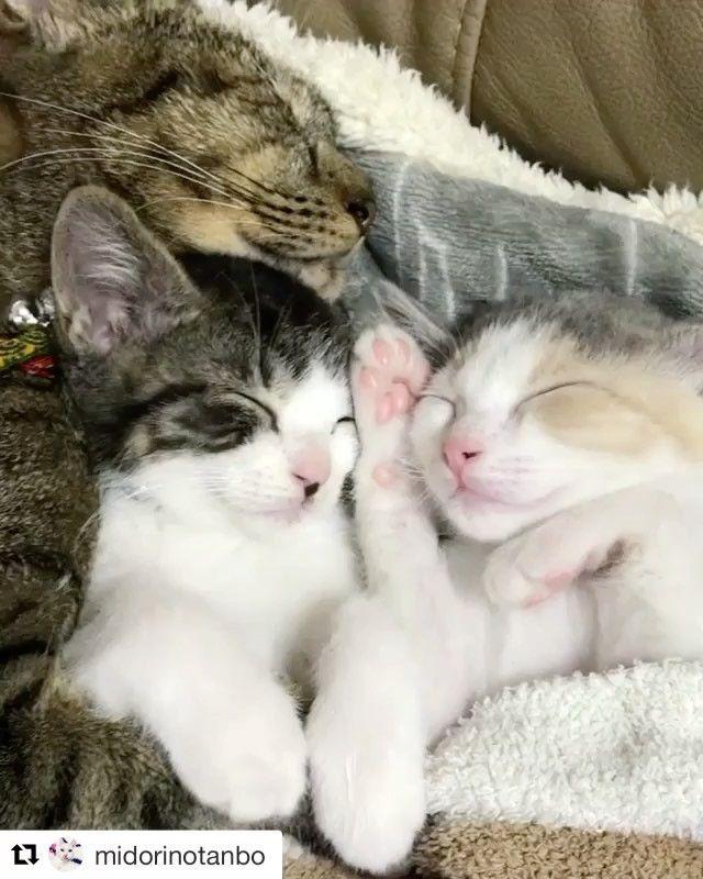Hat Szep Jo Ejszakat Mindenkinek Repost Midorinotanbo Catstagram