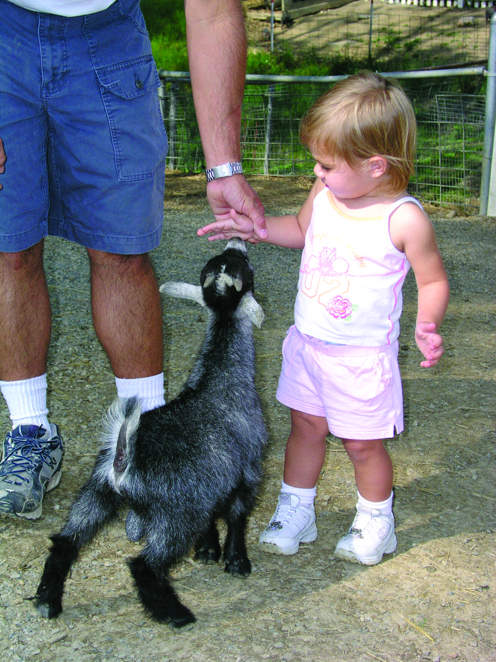 Get Up Close And Personal With All Kinds Of Animals At Rolling Ridge Ranch Amish Country Outdoors Adventure Outdoor Adventure