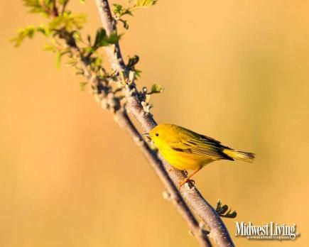 Decorate Your Desktop with Our Wildlife Photos   Midwest Living