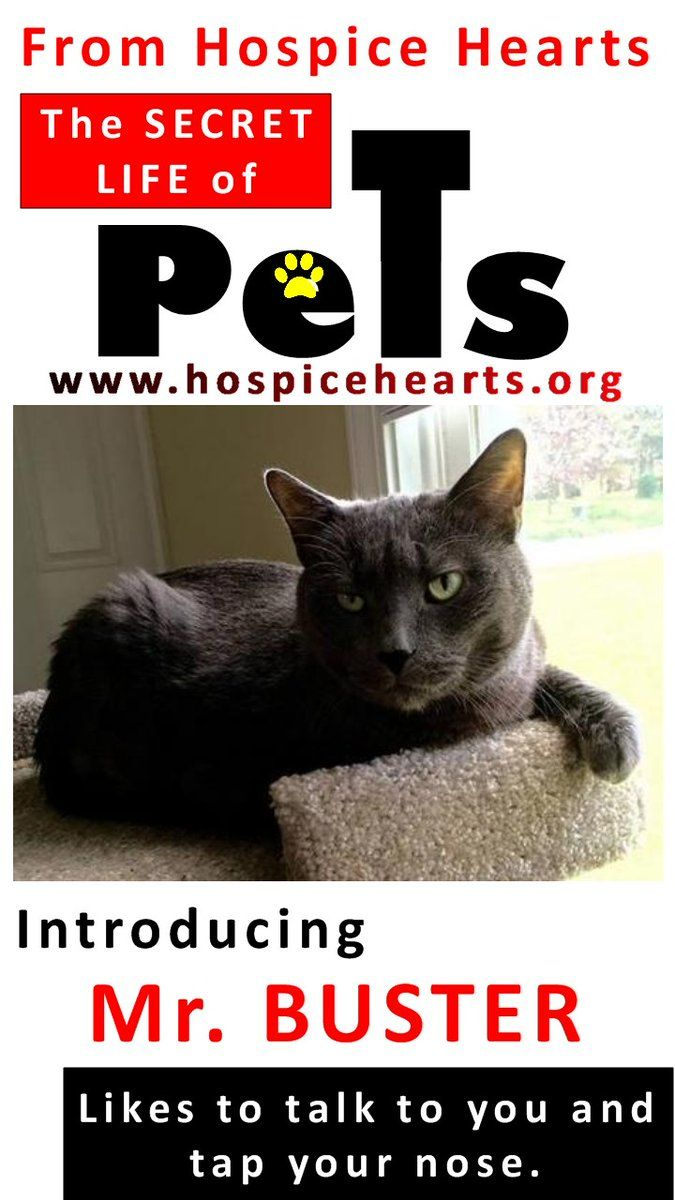 Come see @Hospice_Hearts JULY 8-10 opening weekend of THE SECRET LIFE OF PETS @PetsMovie at SAVOY 16 @GoodrichSavoy