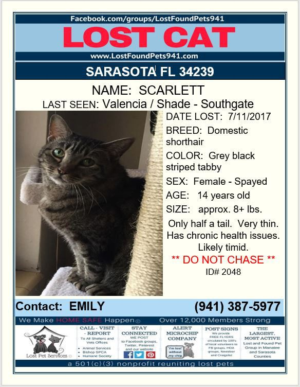 Have You Seen Scarlett Lost Cat Missingpets Sarasota Fl 34239 Lostfoundpets941 Lost Cat Cats Manatee County