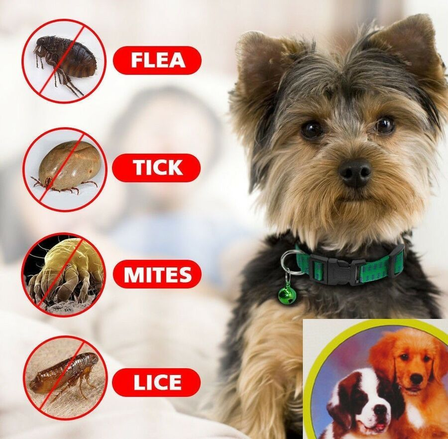 Flea And Tick Collar For Dogs And Cats Anti Parasites Mosquito Cat Dog Collars L Ad Dogs Cats Collar Dogs Fleas Mites On Dogs