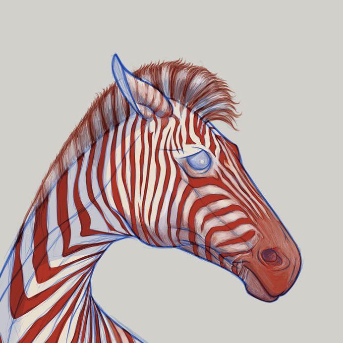 illustration / Richard-Wilkinson - zebra - sketch - ritratto - cavallo - fisico - anatomia