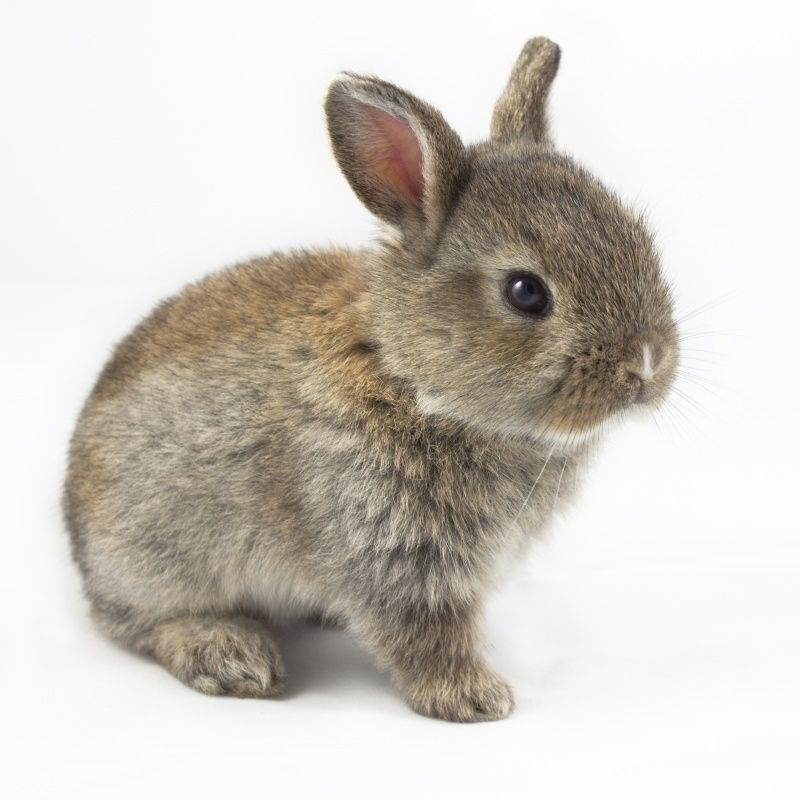 muursticker baby konijn meidenslaapkamer pinterest