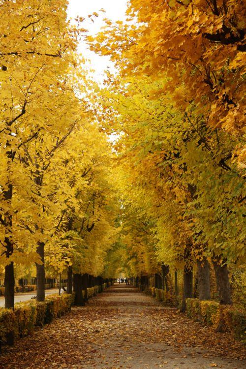 Schönbrunn Palace Gardens, Vienna (by Nina Wöss)