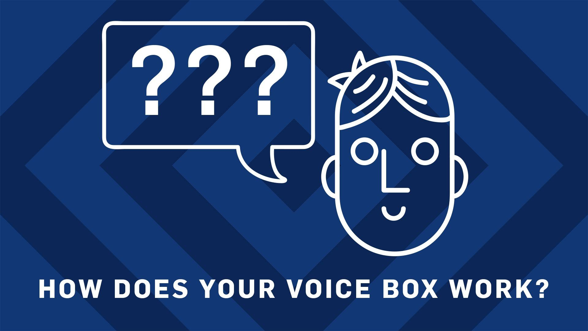How Does Your Voicebox Work