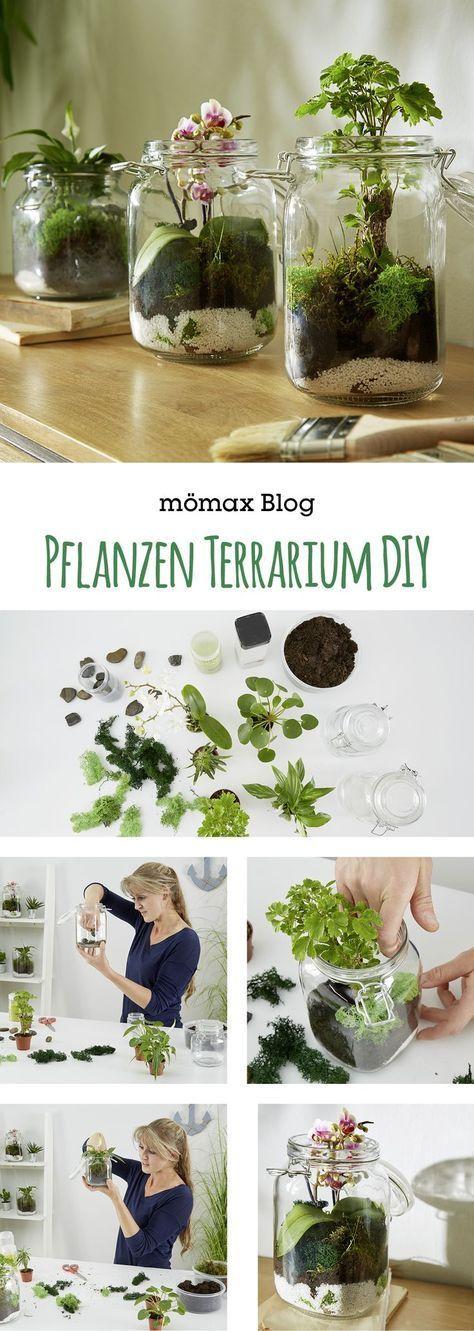 Photo of Pflanzen Terrarium selber machen