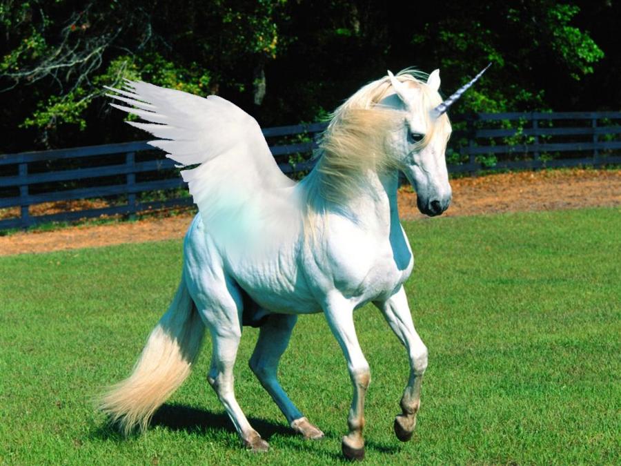 Imágenes de Unicornios REALES | Unicorns, Real unicorn and ...