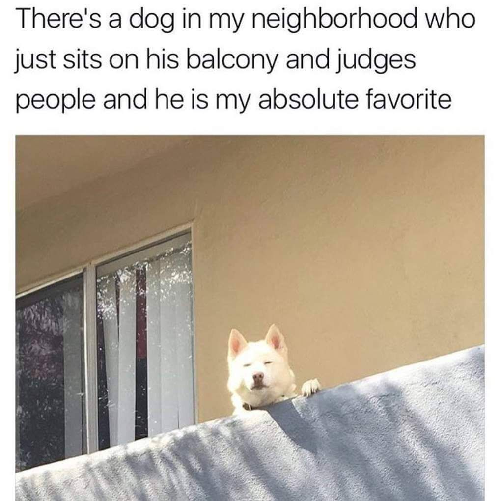 Neighborhood Watch Dog Best Funny Photos Funny Animal Memes Animal Memes