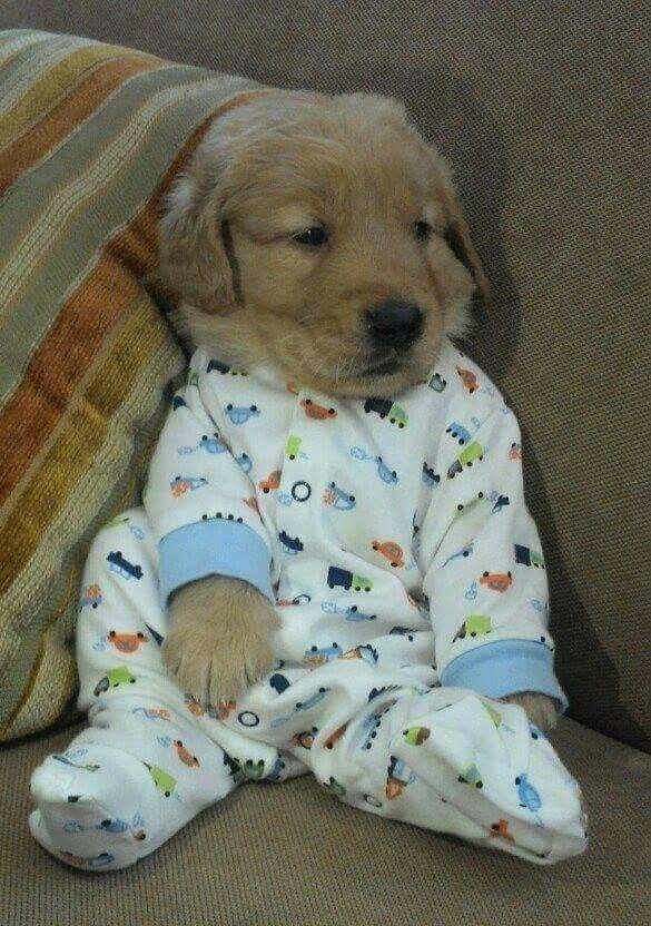 Pin By Lillian On Dogs Cute Baby Animals