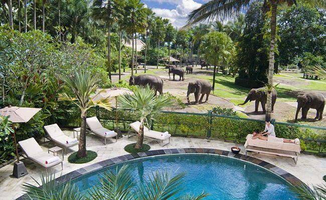 Elephant Safari Park Lodge, Taro, Indonésia