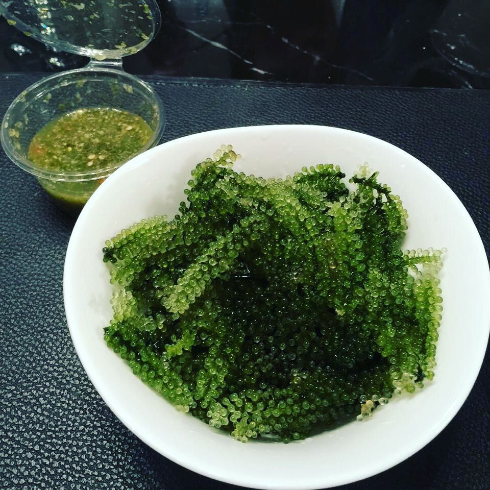Sea grapes, also known as Umibudo, is highly regarded for