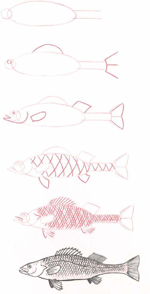 Hoe teken je een vis 2607 comment dessiner
