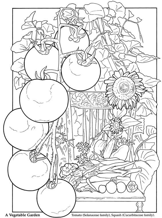 Dover Publications...veggie garden coloring page. Use for ...