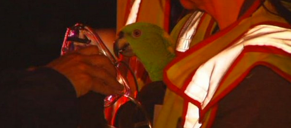 Contained bird cries 'aid, fire' of burning home from inside
